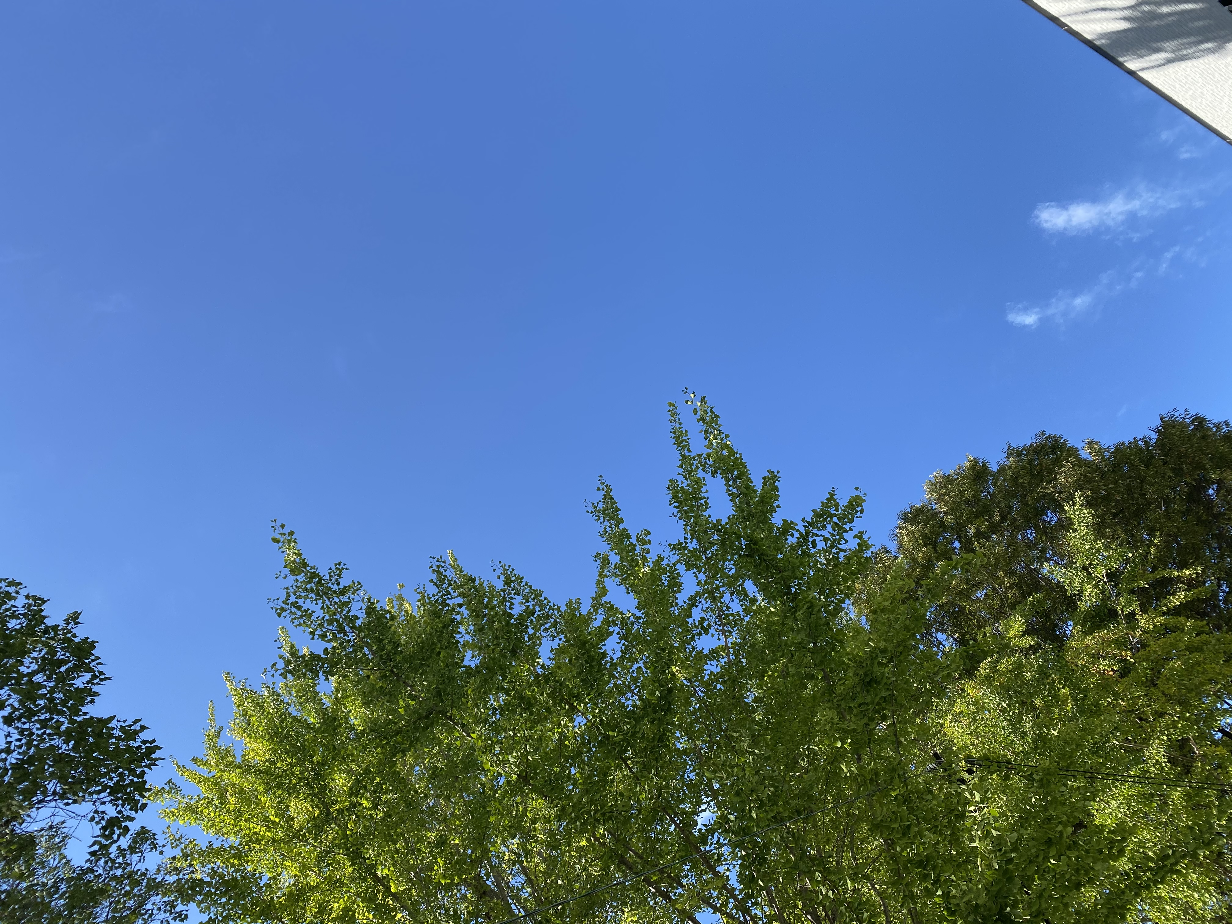 ミニ英会話: 秋だねー!(とても気持ちのいい日だね、という気持ちを表す)